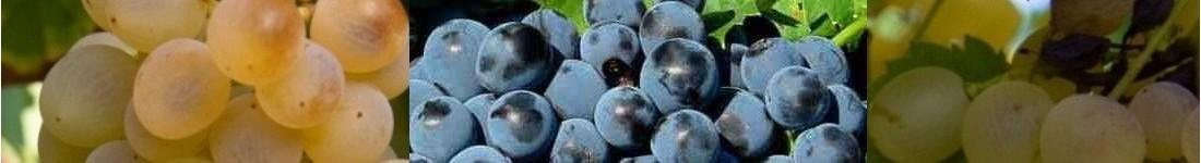 Vinaigres grecs BIO